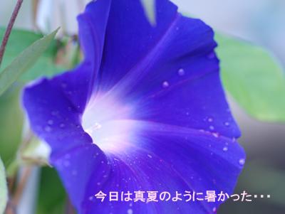 20070928.jpg