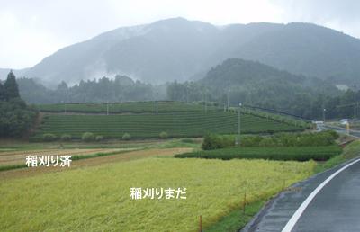 20080826.jpg