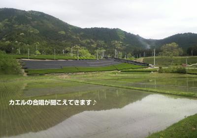 20090426.jpg