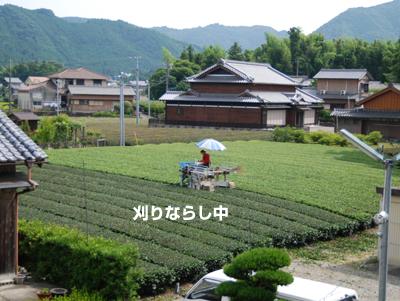 20090704.jpg