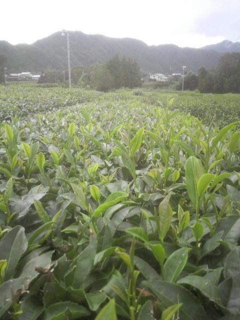 image/2011-09-12T10:02:09-1.jpg